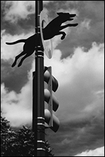 Dog, John Yanson, Washington, DC