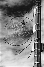 Spider, Breon Gilleran, Washington, DC